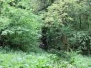 Čiščenje poti po dolini reke Idrije_4