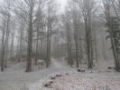 Snežnik_3